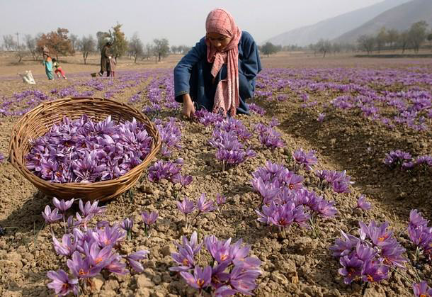 kashmir saffron vs other type