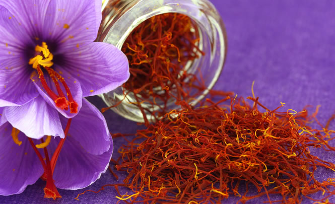 Saffron's Botanical Name:Crocus Sativus
